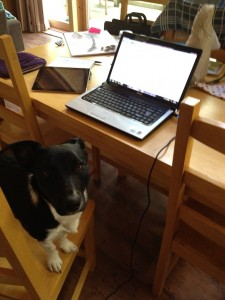 Working from home with pets - healthy body, healthy mind