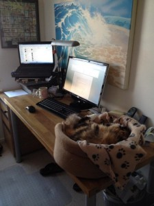 Home office desks - Jonathan Ward's cat