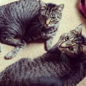 Pet Fursday - the tabby twins