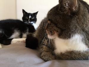 Pet Fursday - Golightly kitties